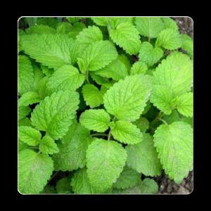 Top 10 Medicinal Plants