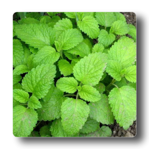 Medicinal Plants Seeds