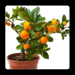 Top 10 Fruit Plants