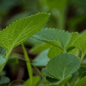 New Medicinal Plants